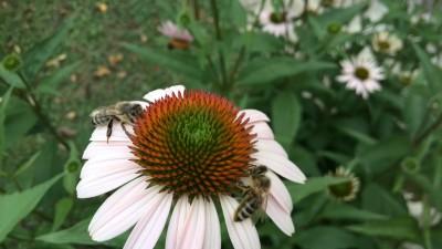 Posvet: »So priložnosti svetovnega dneva čebel res izkoriščene?«