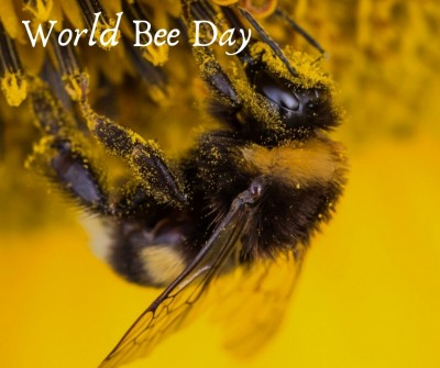 World Bee Day Event