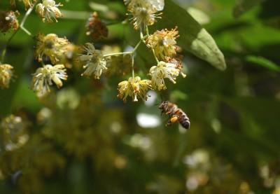 Namestitev čebelnjaka na MOP ob Svetovnem dnevu čebel